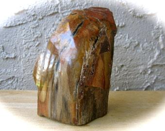 Beautiful Petrified Wood Crystal Stone 90mm 261g