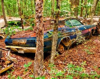 1971 Blue Dodge Demon in woods Photograph