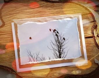 Art Photographic Winter Greetings Card - Rooks Birds - Made to order