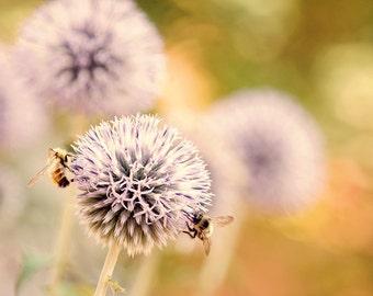 Garden Wall Art, Garden Print, Allium, Bee Print, Garden Art, Flower Photography, Garden Decor, Honey Bee, Pastel Print, Gardener Gift