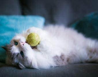 Fuzz!  Jingle Bell Balls Wool Ball Cat/Small Dog Toy 5 Pack of Fun
