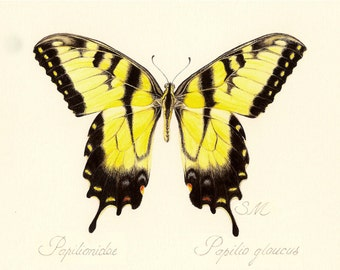 85 Yellow Tiger Swallowtail Butterfly gift card