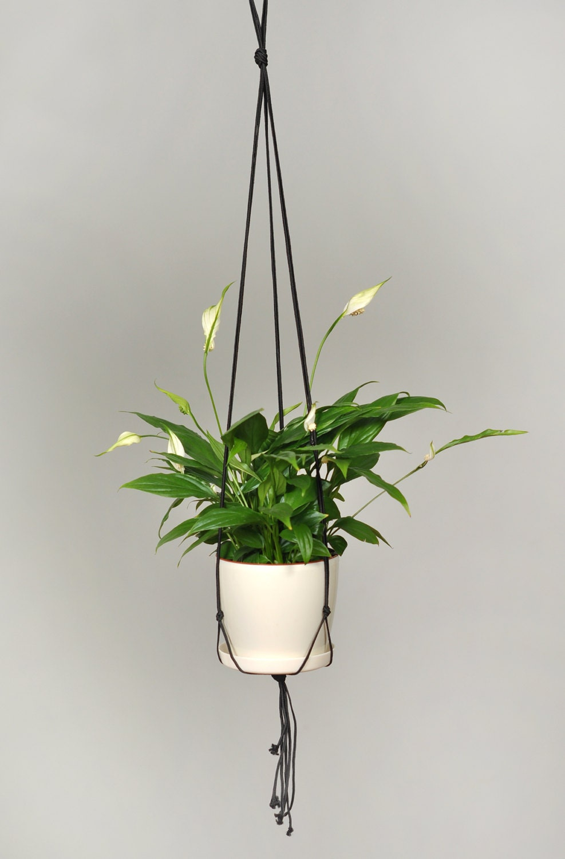 macrame plant hanger black hanging planter office decor