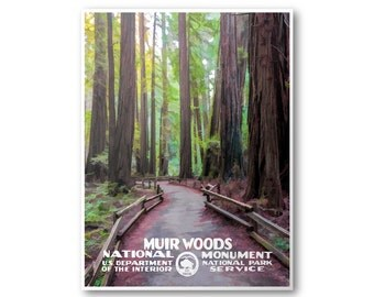 Muir Woods National Monument Travel Poster