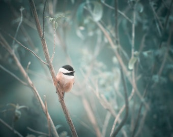 Bird Photo, Bird Art, Chickadee Photograph, Enchanted Forest Decor
