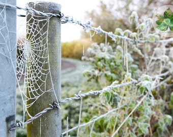 Frozen Web, Gloucestershire A4 photography print, spiders web, nature, frost landscape
