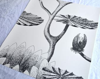 Wallpaper - Cole and Son  Sample Sheet  - 19 x 17 Summer Lily inBlack and White