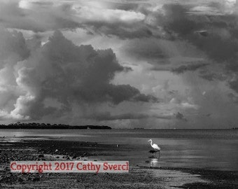 White Egret in Water with Cloud Build-up Landscape Photo