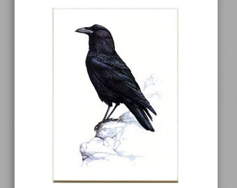 MATTED ARCHIVAL PRINT,Crow Art Print From Original Watercolor, Home Decor Wall Art, Crow Wall Decor Art Print