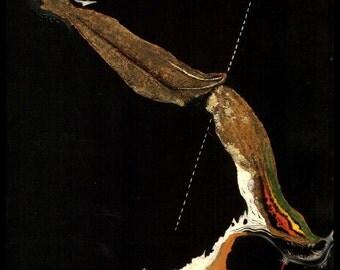 "Salvador Dali, Salvador Dali Print, Salvador Dali Art, Dali Poster, Surrealist, Weird, Strange, Dali, Altered Art, ""Ocell Peix"""