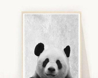 Panda Print, Printable  Art, Panda Photo, Instant Download, Nursery Wall Art, Wall Decor, Black And White, Animal Print, Panda Art, Wall Art