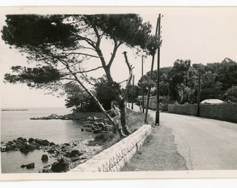Vintage photo 'In a Tree in the Mediterranean' snapshot vernacular photo, black and white, landscape, man posing in tree
