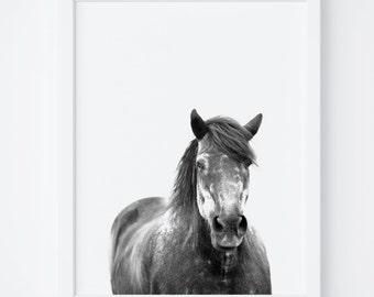 Horse Print,Digital Art,Printable Wall Art,Digital Print,Instant Download, Horse Photo, Wall Decor, Printable Art, Modern Art,Horse Wall Art