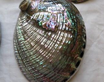 Abalone Shell, Abalone, Seashell, Abalone approximately 6 inch, Abalone Shell both sides polished