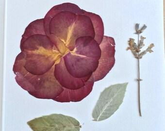 Dried Flowers  Card, Pressed Flowers Card, Dried Pressed Flower, Pressed Rose