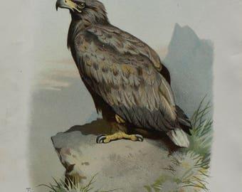 antique print eagle 1883