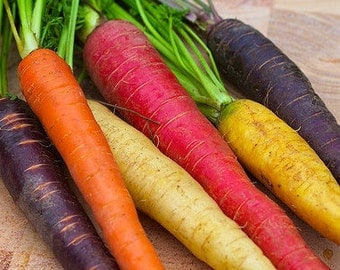 SALE Rainbow Carrot Seed Mix Non GMO Organic 500 Seeds #1143