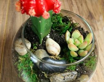Succulent Terrarium Kit - Complete Glass Bowel Terrarium, Moss, River Rocks, Organic Succulent Soil, activated Charcoal, Pea Gravel.