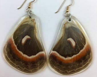 Real (Cercopia Moth) butterfly wings