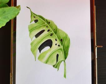 Botanical art. Original watercolor painting on 300gr watercolorpaper: Monstera Leaf