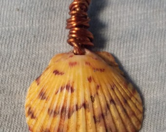 Natural Beauty from the sea, Shell Pendant Necklace