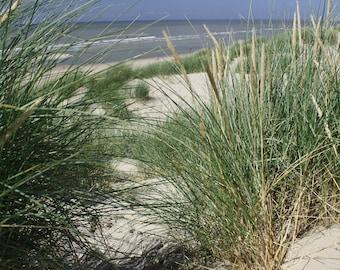 Sand Dunes at Le Touquet