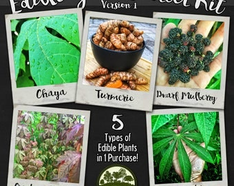 Edible Yard Starter Kit - 5 Types of Edible Plants - Cuttings & Live Plants - Turmeric, Mulberry, Cassava, Chaya and Cranberry Hibiscus