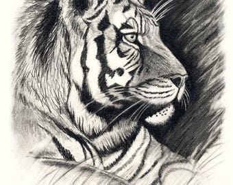 Tiger Blank All Occasion Greeting Card, 5 x 7 inches, can be framed