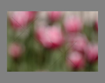 Pretty Pink Blurred Tulips in Garden Digital Photo Download, Soft Spring Flower Bokeh Background Stock Image File