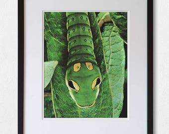 Caterpillar - 60's vintage book photograph page