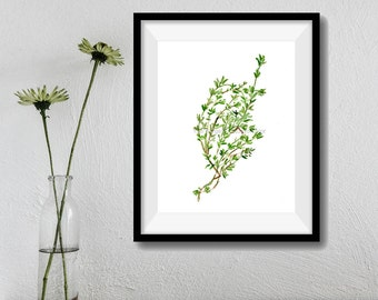 Art Print Thyme, herb print, watercolor painting, Kitchen decor, herb art, botanical print, green, foodie, kitchen art