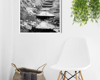 Black and white Print, Minimalist Living Room Decor, Woodland Print, monochrome Photo, Boho Print, Natural History Print, Forest Wall Art