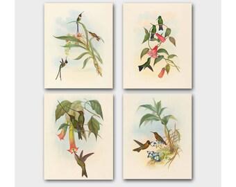 Hummingbird Art (Vintage Birds Print, Antique Home Decor) John Gould Illustration - Set of 4 Bird Prints