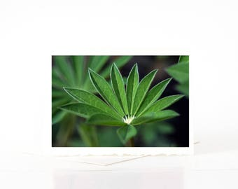 Lupine Leaves Cards, Water Droplet Blank Photo Greeting Cards, Green Leaf Photo Note Card Sets, Macro Nature Photography Cards