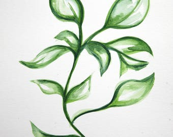 Original 9 x 12 inch watercolor painting of a botanical plant by Meredith O'Neal