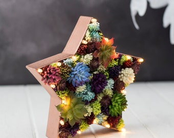 Star light - Christmas decoration - artificial succulent letter - star night light