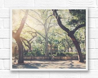 Charleston SC print, vintage photography, Charleston wall art, live oak tree print, Charleston print, Charleston photography, Spanish moss
