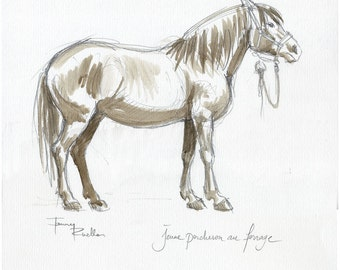 Young percheron horse shoeing - watercolor on the spot