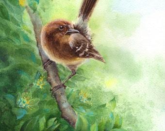 "Hawaiian  Elepaio bird watercolor 12 X 16"" canvas wrap print"