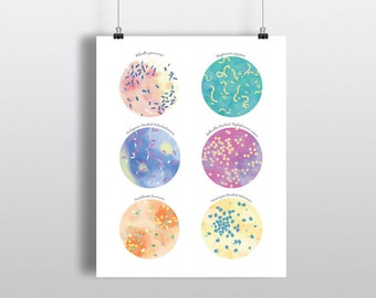 Antibiotic Resistant Bacteria, Microbiology Poster, Science Art, print, wall decor 5 x 7 in, 8 x 10 in, 11 x 14 in