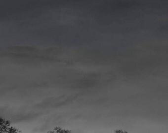 The Full Moon Above Dark Trees