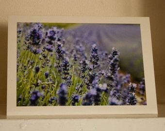 Greetings card: Purple fields