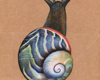Snail -- Colored Pencils -- Polymita Sulphurosa -- Wall Art