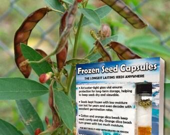 Asian leguminous shrub cajanus cajan