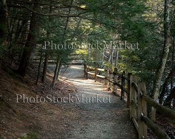 Forest Path - 2 - Digital Background 55 - Photography backdrop - Photoshop - Digital download - Woodland scene