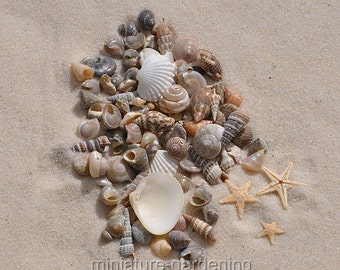 Tiny Starfish, Seashells for Miniature Garden, Fairy Garden