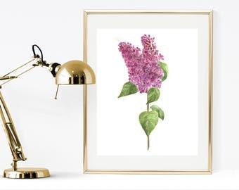 Botanical Lilac print, watercolor lilac, watercolor print, printable lilac painting, watercolor botanical lilac, purple flower wall art
