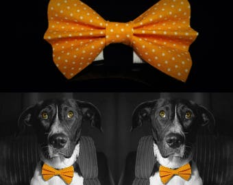 Orangedotty Dog Bow Tie - Orange