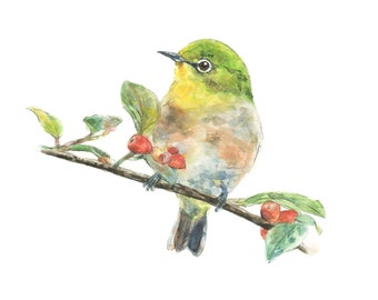 Japanese White-eye watercolor painting - bird watercolor painting - 5x7 inch print - 0073