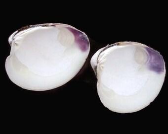 Wampum Quahog Shells(2-3in) -hand collected, purple shell, craft shell, beach decor, clam shell, whole wampum, air plant shell, terrarium